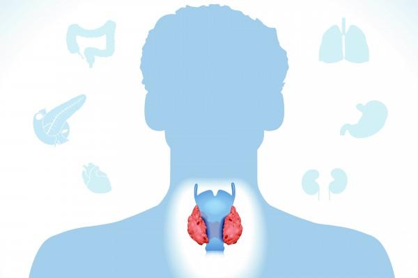Endocrinologie et maladies du métabolisme